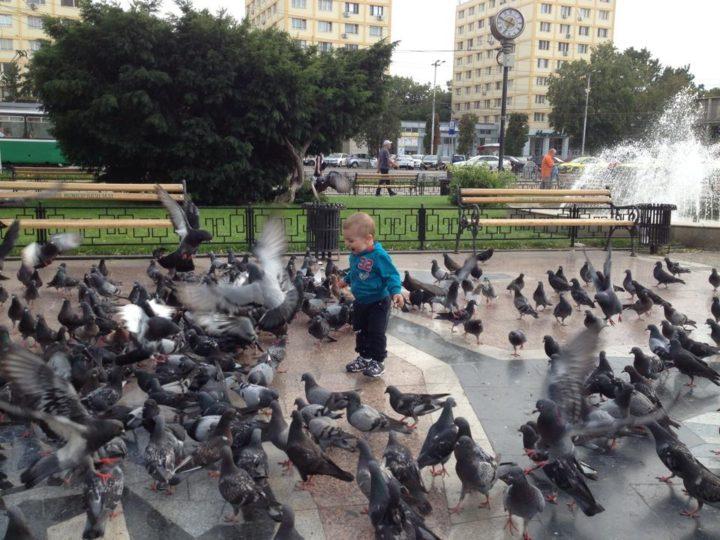 Porumbeii din parc