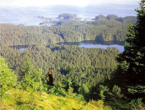 insula-spruce-laguna-calugarului
